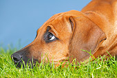 PUP 42 PE0004 01