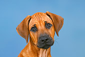 PUP 42 PE0005 01
