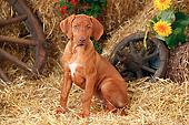 PUP 42 PE0007 01