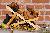 PUP 42 SS0004 01