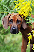 PUP 42 SS0014 01