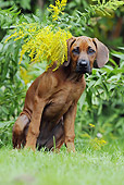 PUP 42 SS0015 01