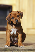 PUP 42 SS0016 01