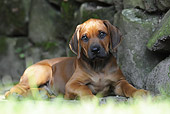 PUP 42 SS0017 01