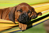PUP 42 SS0019 01