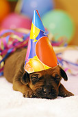 PUP 42 SS0020 01