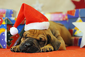 PUP 42 SS0021 01