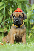 PUP 42 SS0022 01