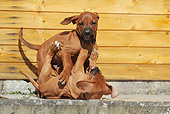 PUP 42 SS0025 01