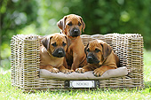 PUP 42 SS0030 01