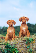 PUP 42 CE0003 01