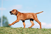 PUP 42 SS0001 01