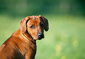 PUP 42 SS0003 01