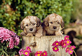PUP 43 RC0001 01
