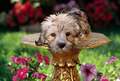 PUP 43 RC0004 01