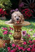 PUP 43 RC0005 01