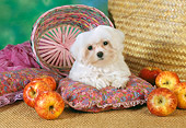 PUP 43 RC0009 01