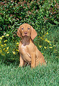 PUP 44 CE0005 01