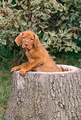 PUP 44 CE0007 01