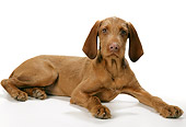 PUP 44 JD0001 01