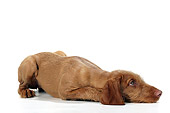 PUP 44 JD0002 01