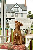 PUP 44 MQ0001 01