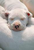 PUP 45 AB0002 01