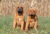 PUP 45 AB0004 01