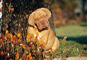 PUP 45 CB0006 01
