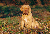 PUP 45 CB0007 01