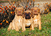 PUP 45 CB0009 01