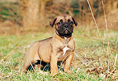 PUP 45 CB0010 01