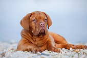 PUP 45 CB0017 01
