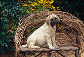 PUP 45 CE0013 01