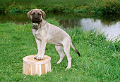 PUP 45 FA0001 01
