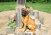 PUP 45 FA0003 01