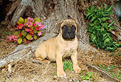 PUP 45 FA0004 01