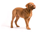PUP 45 JE0001 01