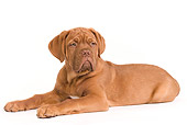 PUP 45 JE0004 01
