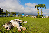 PUP 45 JE0008 01