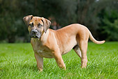 PUP 45 JS0001 01