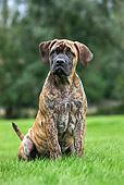 PUP 45 JS0002 01