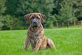 PUP 45 JS0003 01