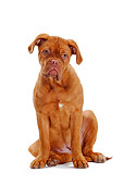 PUP 45 PE0001 01