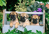 PUP 45 CE0001 01