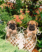 PUP 45 CE0002 01