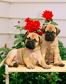 PUP 45 CE0003 01