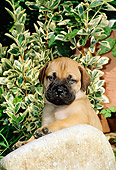 PUP 45 CE0004 01