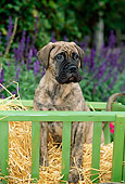 PUP 45 CE0005 01
