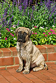 PUP 45 CE0006 01